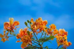 Colurfulbloemen en groene bladeren met blauwe hemelachtergrond Royalty-vrije Stock Foto's