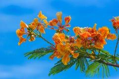 Colurfulbloemen en groene bladeren met blauwe hemelachtergrond Stock Fotografie