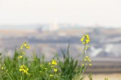 Colza em Front Of Destroyed Landscape fotos de stock