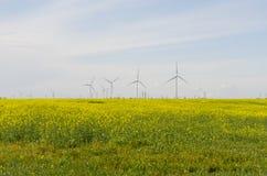 Colza Field Landscape Stock Image