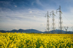 Colza field and powerline electricity. Scenery in Transylvania, Romania with colza field and powerline electritiy, Carpathian Mountains in background Royalty Free Stock Photography
