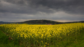 Colza fields of Lower Saxony , in Germany Stock Photos