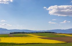 Colza. Fields. Sky. Yellow. Meadow stock photography