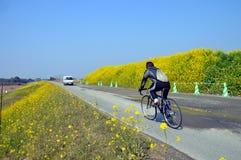 Colza i fiori sulla riva del fiume/paesaggio del giapponese a marzo Immagini Stock Libere da Diritti