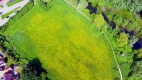 Colza il campo ed i laghi da sopra, vista aerea un giorno caldo del ` s dell'estate video d archivio