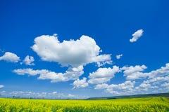 Colzafield de florescência sob o céu azul com nuvens brancas Fotografia de Stock Royalty Free