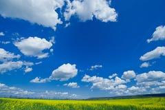 Colzafield de florescência sob o céu azul com nuvens brancas Imagens de Stock