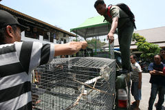 Comércio do animal fotografia de stock royalty free