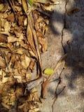 Com folhas seco do close up na terra Imagens de Stock Royalty Free