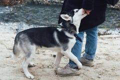 com o cão ronco no parque fotografia de stock