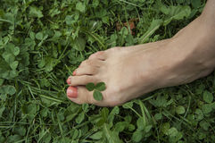 Com os pés descalços na grama Foto de Stock