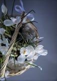 Com a primeira cesta dos açafrões Imagem de Stock Royalty Free