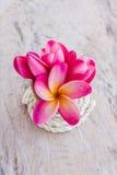 (Com trajeto de grampeamento) plumer cor-de-rosa doce bonito da flor Fotos de Stock Royalty Free