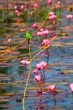 coma el pájaro y la flor de la abeja Fotos de archivo libres de regalías