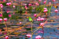 coma el pájaro y la flor de la abeja Fotografía de archivo