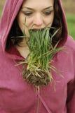 Coma la hierba Foto de archivo libre de regalías