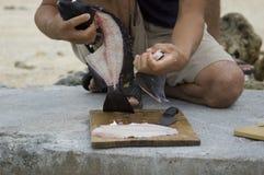 Coma más pescados Fotografía de archivo libre de regalías