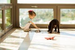 Coma su comida, perrito fotografía de archivo libre de regalías