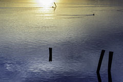 Comacchio valley lagoon. Sun reflections in the sea in a Sunset on the Po river lagoon stock photography