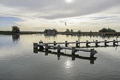 Comacchio valley lagoon. Sunrise in an eels farm at the Po river lagoon stock photography