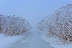Comana湖在冬天 免版税库存照片