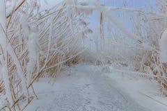 Comana湖在冬天 库存照片