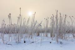 Comana湖在冬天 库存图片