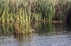 Comana湖 库存照片