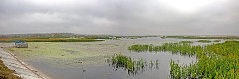 Comana delta panorama. Panorama from Comana natural park Royalty Free Stock Photo