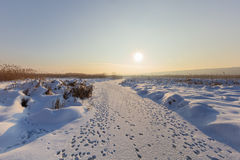 Comana jezioro w zimie Obrazy Stock