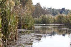 Comana lake - RAW format Stock Image