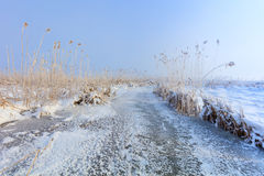 Comana lake in winter Stock Images