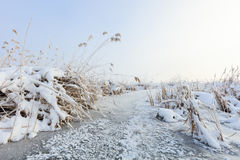 Comana lake in winter Royalty Free Stock Photography