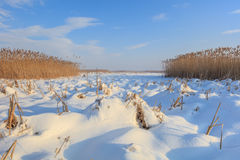 Comana lake in winter. Lake in winter. Location: Comana Natural Park, Romania Royalty Free Stock Images