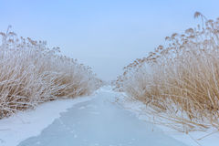 Comana lake in winter Royalty Free Stock Images