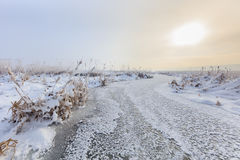 Comana lake in winter. Sunrise in winter. Location: Comana Natural Park, Romania Royalty Free Stock Photo