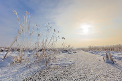Comana lake in winter. Sunrise in winter. Location: Comana Natural Park, Romania Stock Photos