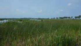 Comana natural park view. Royalty Free Stock Image