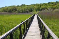 Comana-Naturpark Stockfotografie