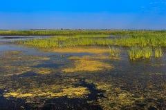 Comana sjö Arkivbild