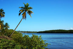 Comandatuba海岛 库存图片