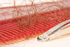 Comb and hair. Lost hair on the comb of the illness Royalty Free Stock Photo