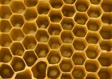 comb honey Στοκ εικόνα με δικαίωμα ελεύθερης χρήσης