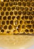 comb honey Στοκ φωτογραφία με δικαίωμα ελεύθερης χρήσης