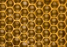comb honey Στοκ Φωτογραφίες