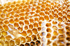 Comb honey Royalty Free Stock Images
