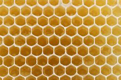 Comb honey. For background use royalty free stock photography