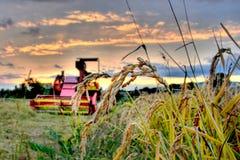 Combain on rice field Royalty Free Stock Photo