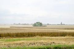 Combain si raccoglie sul raccolto del grano Macchinario agricolo nel campo Immagini Stock