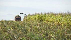 Combaine-жатка разгружая мозоль в прицепе для трактора тележки в кукурузном поле акции видеоматериалы